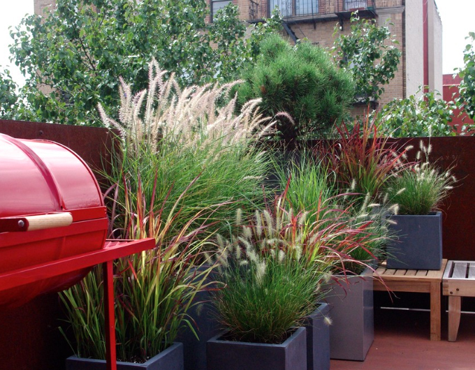 Staghorn NYC Landscape Design-2