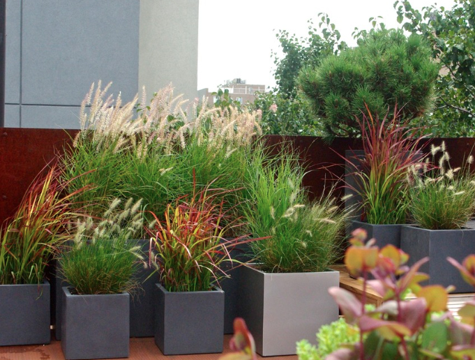 Staghorn NYC Landscape Design-10
